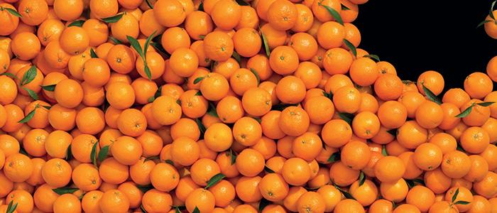 Le arance della Salute aiutano la ricerca contro il cancro